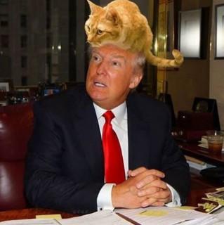 Donald trump ic ne de sang arr t sur images for Coupe de cheveux donald trump